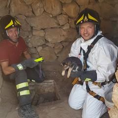 11 cuccioli di cane in un pozzo di Mariotto: salvati dai Vigili del Fuoco