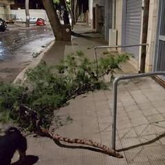 Il ramo caduto in via Traiana