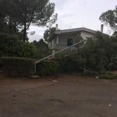 Un albero caduto nei pressi di Mariotto, al Lamione