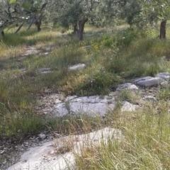 tratto della via Traiana Bitonto Sovereto