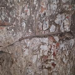 Un segno alla base del tronco
