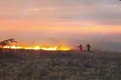 Incendio Bosco Rogadeo domato, la gratitudine del Sindaco di Bitonto