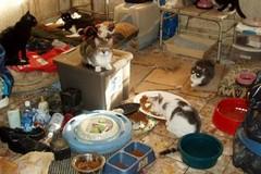 Famiglia disagiata in casa con 50 gatti a Bitonto