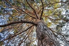 Un albero per ogni nato: il progetto di VogliAMO Bitonto Pulita e Mowgli