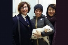 Alessandra Amoroso adotta a Bitonto un meticcio dal canile comunale
