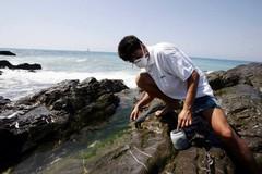 """Alga tossica, """"molto abbondante"""" la concentrazione sul litorale amato dai bitontini"""