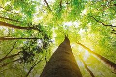 Ambiente: martedì focus del Pd su «Gestione integrata dei rifiuti: quale futuro»