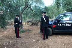 Da Bitonto a Capurso per rubare olive: arrestati in 3