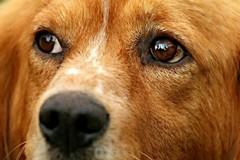 In Puglia se adotti dal canile il veterinario è gratis