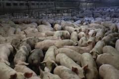 Smaltimento carcasse animali: una legge per monitorare le cause di morte e tutelare salute pubblica