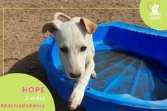 #AdottaUnAmico: Hope cerca casa