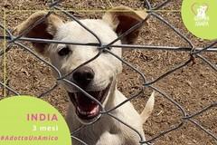 #Adotta un amico: India cerca casa