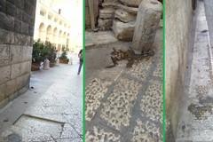 Deiezioni canine nel centro storico: i residenti chiedono un piano di pulizia delle strade