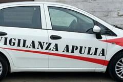 Furto in una villa tra Mariotto e Terlizzi: l'allarme mette in fuga i ladri