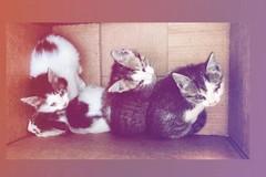 Abbandonati in una scatola: gattini cercano casa
