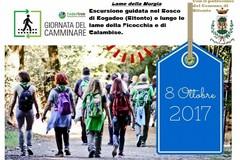 Escursione nel Bosco di Rogadeo per celebrare la 'Giornata nazionale del Camminare'