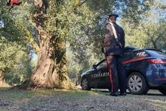 Scappano col carico di olive rubate a Palo: fermati due giovani