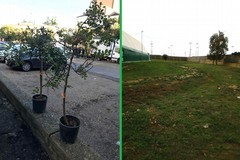 Nuovi alberi piantati a Bitonto grazie ad #AlberiPerIlFuturo