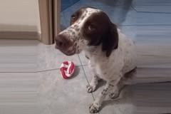 Trovato morto sui binari a Bitonto Zeus, il cane rimasto in auto durante una rapina