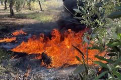 Lotta agli incendi estivi: un'ordinanza ribadisce gli obblighi anche nel territorio di Bitonto