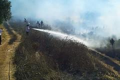 Incendio di sterpaglie lungo la Sp156: le Guardie Ambientali salvano Lama Balice