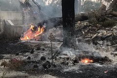 Rifiuti a fuoco tra Bitonto e Terlizzi: in fumo 500 metri di vegetazione e pini secolari