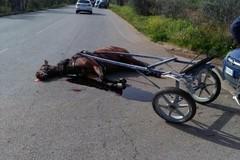 Incidente auto-calesse. Nell'impatto muore il cavallo