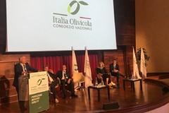 Italia Olivicola: «La vera invasione che distrugge l'extravergine italiano è quella degli oli deodorati»