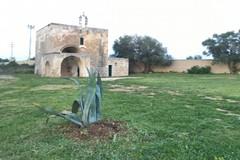 Le piante abbandonate tornano a nuova vita nel giardino della chiesa dell'Annunziata