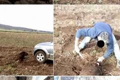 Investe e sgozza un cinghiale nel Parco dell'Alta Murgia: è caccia aperta al responsabile