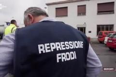 Le frodi sull'olio EVO finiscono a Report. Italia Olivicola: «Guerra ai disonesti»