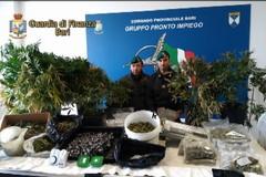 Scoperta a Mariotto una serra per la marijuana nei sotterranei di un edificio in costruzione