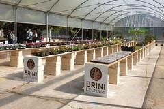 Una serra didattica per disabili e nuovi alberi per il territorio a Bitonto grazie al M5S