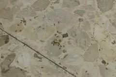Pazienti tra le formiche nell'ospedale di Bitonto