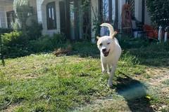 La storia di Maby: adottato e restituito