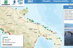 Mari inquinati: Legambiente promuove le spiagge del Barese
