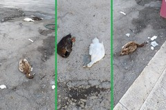 Papere uccise a S.Spirito: potrebbe essere veleno per topi