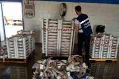 Pesce sequestrato e donato alle mense Caritas di Bari e Bitonto