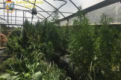 Sequestro record della Finanza a Bitonto: trovata droga per 5 milioni
