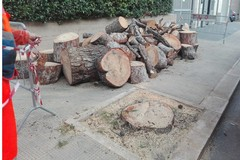 Pini abbattuti in via Traiana, Fare Verde: «Subito un piano di riforestazione»
