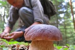 A Bitonto un corso di formazione per la raccolta funghi