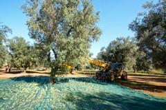 I costruttori dell'olivicoltura:il primo think tank per disegnare il futuro del settore