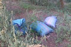 Furti di ortaggi nelle campagne di Bitonto: presi tre ladri
