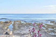 """Alga tossica: disco verde per le spiagge """"bitontine"""" di Giovinazzo e S.Spirito"""