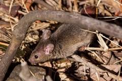 Topi nella villa comunale di Bitonto: vietato dar da mangiare agli animali
