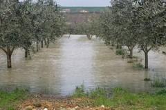 Agricoltura a rischio, Assoproli: «Pianificazione territoriale e accordi con le assicurazioni»