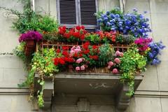 """I fiori fanno bella la città col concorso """"La grasta sulla terrazza"""""""