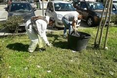 Onda verde a Bitonto, Mariotto e Palombaio: impianti 27 nuovi lecci