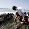"""Alga tossica,  """"molto abbondante """" la concentrazione sul litorale amato dai bitontini"""
