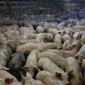 Approvata all'unanimità la legge sullo smaltimento delle carcasse animali proposta da Damascelli (FI)